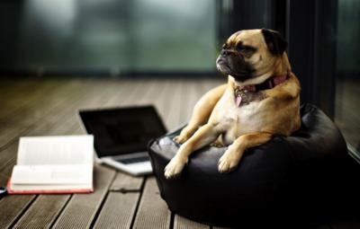 chien-en-entreprise-reduit-le-stress
