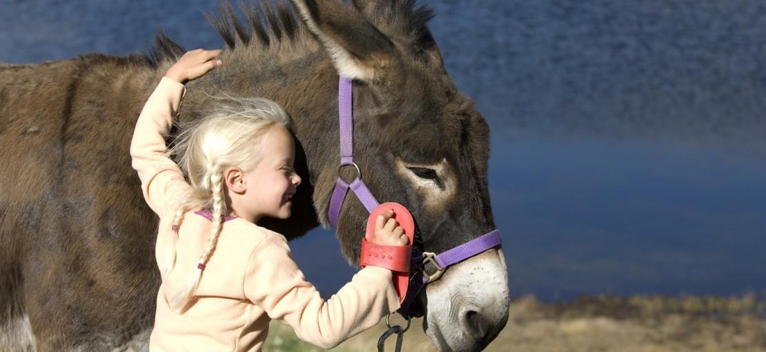 Balade avec les ânes. Queyras.