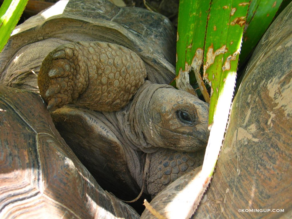 ile-rodrigues-ocean-indien-la-reserve-de-tortues-de-francois-leguat