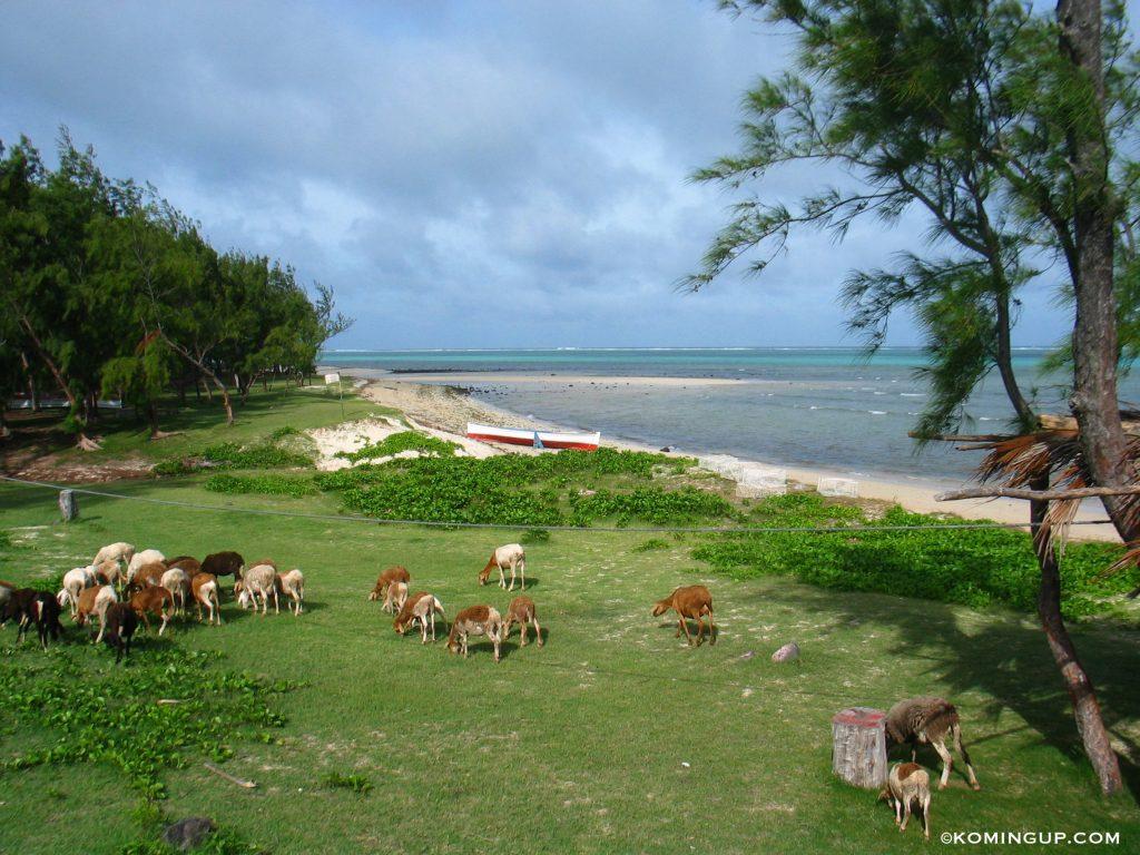 ile-rodrigues-ocean-indien-plage-de-la-belle-rodriguaise