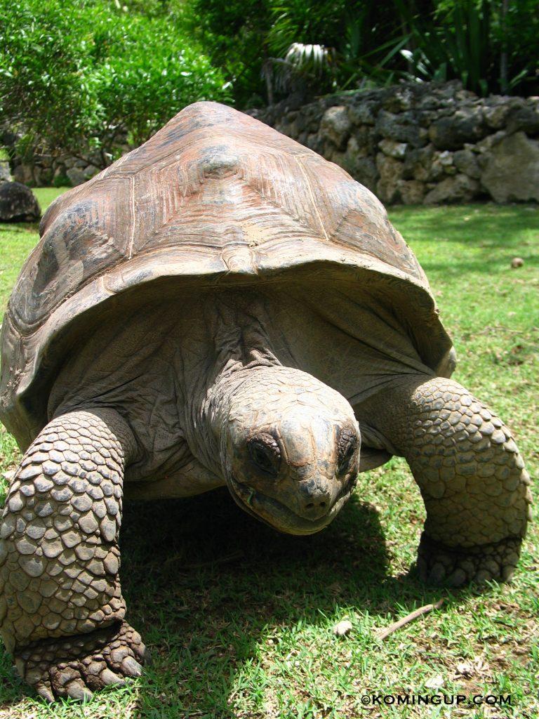 ile-rodrigues-ocean-indien-tortue-reserve-francois-leguat