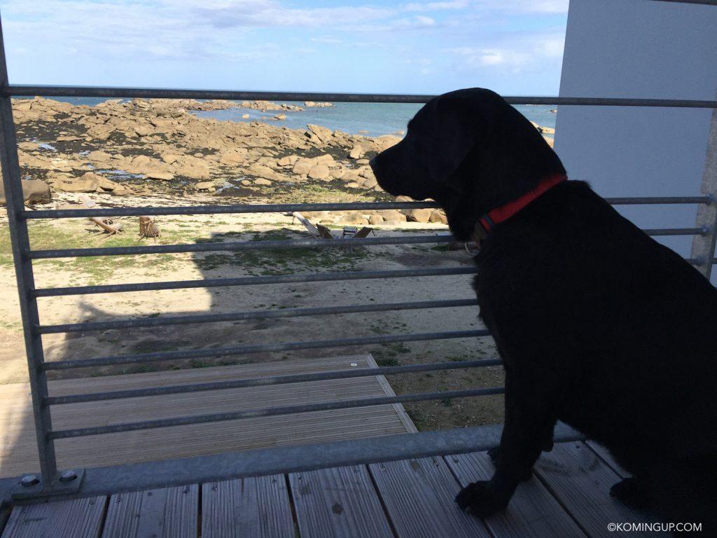 hotel-de-la-mer-brignogan-plage-cote-des-legendes-finistere-nord-bretagne-charlie